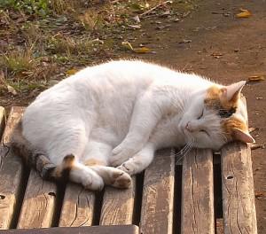 羽根木公園で眠るネコ