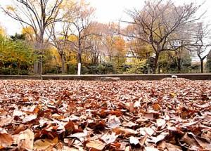 新宿中央公園 落葉
