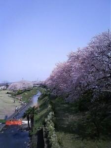 県立相模三川公園(海老名) 海老名駅から徒歩20分<br />
