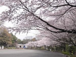 芹ケ谷公園(町田)<br />