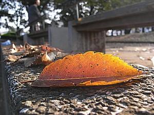 湘南台公園の落ち葉