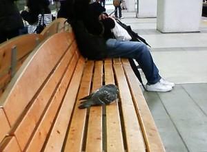 町田駅のベンチで寛ぐ鳩