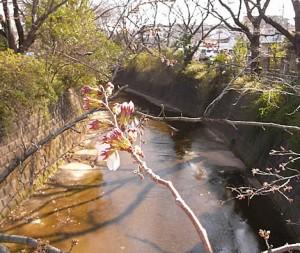 麻生川4月1日