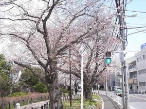 烏山川緑道 経堂周辺
