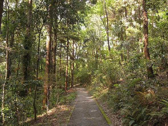 三峰神社に続く道